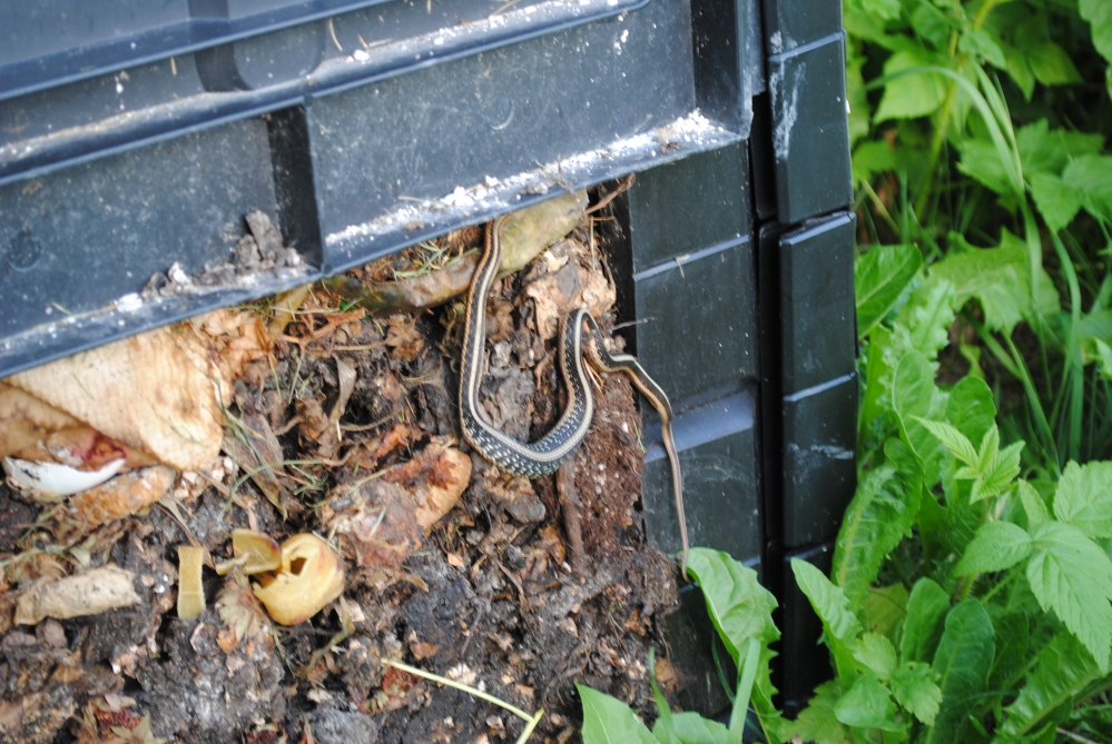 Make the Most of your Compost (3/5)